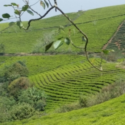EXP7. TEA AND COFFEE FARMS